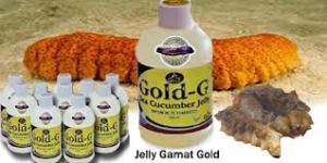 jelly-gamat-gold-sea-cucumber